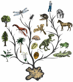 evolution tree wikipedia